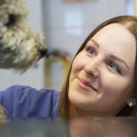 veterinär krullig hund
