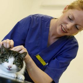 veterinär svart vit katt