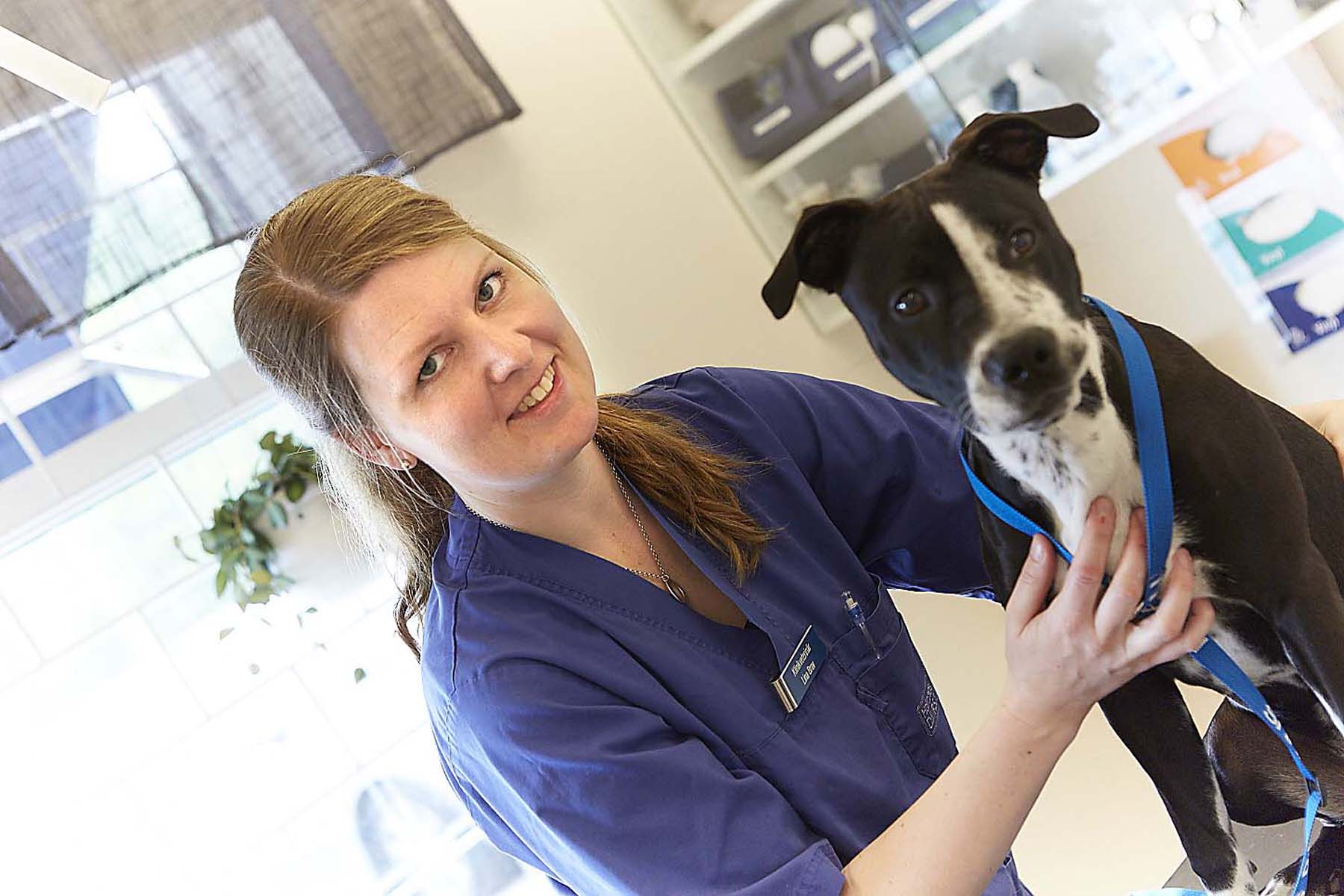 veterinär svart vit hund