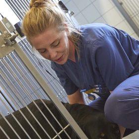 veterinär undersöker hund
