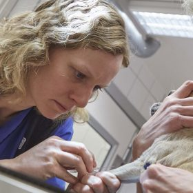 veterinär liten hund (1)
