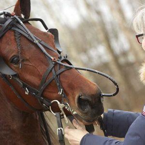 veterinär häst