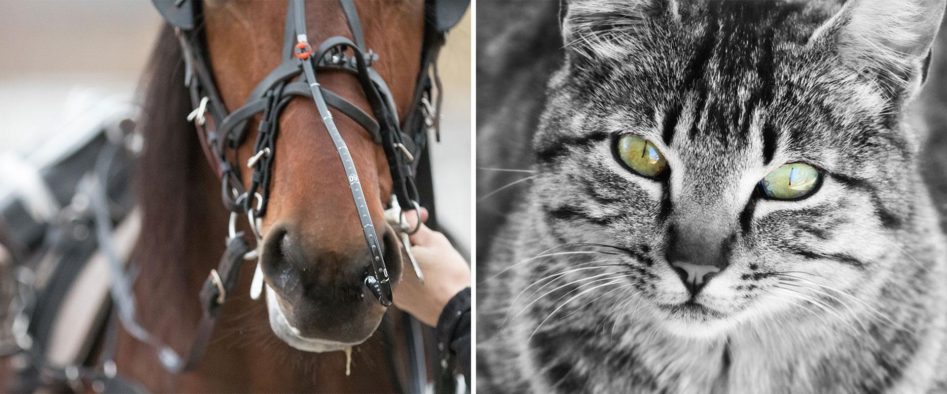 häst och svartvit katt